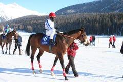снежок гонки лошади Стоковое Фото
