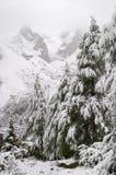 снежок гор доломита осени предыдущий стоковые фотографии rf