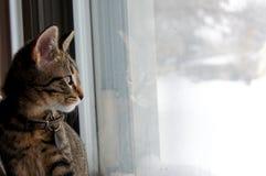 снежок дня Стоковая Фотография