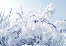снежок завода Стоковые Фотографии RF