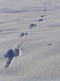 снежок зайцев следа ноги Стоковые Изображения