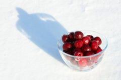 снежок замерли вишней, котор Стоковая Фотография RF