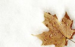 снежок клена листьев Стоковые Фотографии RF