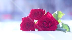снежок красного цвета розовый Цветок, зима, заморозок акции видеоматериалы