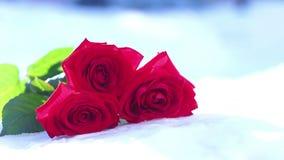 снежок красного цвета розовый Цветок, зима, заморозок сток-видео