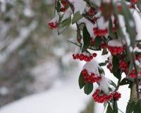 снежок красного цвета ягод стоковые изображения