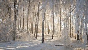 снежок ландшафта стоковая фотография rf