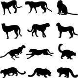 снежок леопардов гепардов иллюстрация вектора
