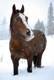 снежок лошади Стоковое фото RF