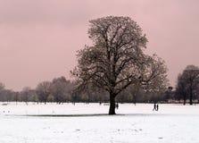 снежок места парка Стоковая Фотография
