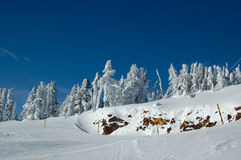 снежок наклона лыжи пущи Стоковая Фотография RF