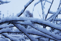 Снежок на ветви Стоковое фото RF