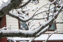 Снежок на ветвях дерева Стоковые Фото