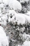 Снежок на ветвях стоковые изображения rf