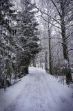 Снежок на дороге стоковое фото rf
