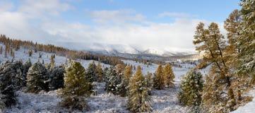 снежок осени первый Стоковые Фотографии RF