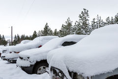 снежок падения свежий Стоковое Изображение RF