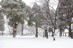 Снежок покрыл землю Стоковая Фотография RF