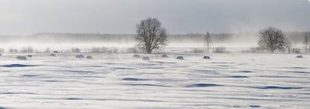 Снежок покрыл поле Стоковое Изображение