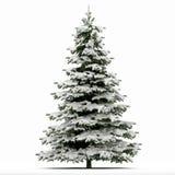 Снежок покрыл рождественскую елку Стоковые Фото