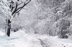 Тропка зимы Стоковая Фотография