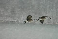 снежок полета Стоковое Изображение