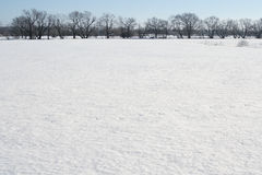 снежок поля Стоковые Изображения RF