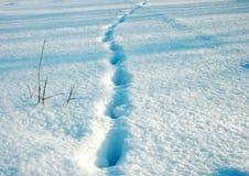 снежок предпосылки Стоковые Фото