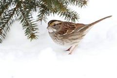 снежок птицы Стоковые Фотографии RF