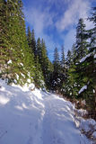снежок путя пущи Стоковые Фото