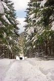 снежок путя стоковое изображение rf