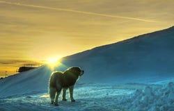 снежок святой сумрака bernard Стоковое Фото