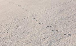 снежок следов ноги загадочный нетронутый Стоковое Фото