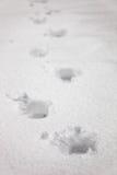 снежок следов ноги крупного плана Стоковые Фотографии RF