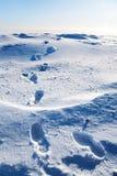 снежок следов ноги Стоковые Фото