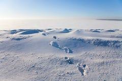 снежок следов ноги Стоковое Изображение