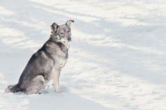снежок собаки сидя Стоковое Изображение RF