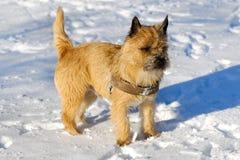 снежок собаки стоковые фото