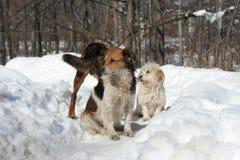 снежок собак Стоковые Фотографии RF