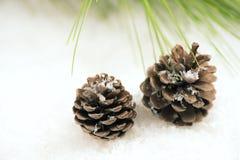 снежок сосенки конуса Стоковые Изображения RF