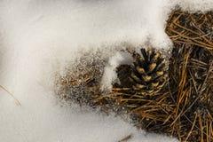 снежок сосенки конуса Стоковое Изображение RF
