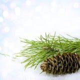снежок сосенки конуса Стоковое Фото