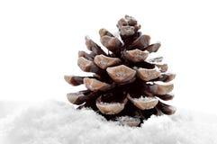 снежок сосенки конуса Стоковое Изображение