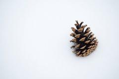 снежок сосенки конуса Стоковые Фотографии RF
