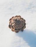 снежок сосенки конуса Стоковая Фотография