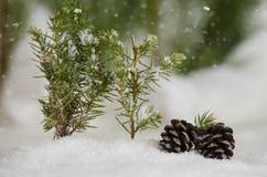 снежок сосенки конусов Стоковое Фото