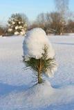 снежок сосенки крышки малый Стоковое Изображение