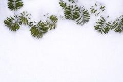 снежок сосенки рамки ветвей Стоковая Фотография RF
