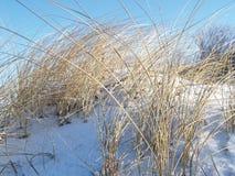 снежок сухой травы зима температуры России ландшафта 33c января ural Стоковые Изображения