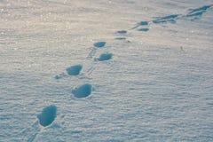 снежок следов ноги свежий Стоковое Изображение RF